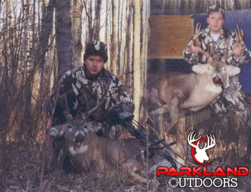 Old Mature Whitetail – 2001